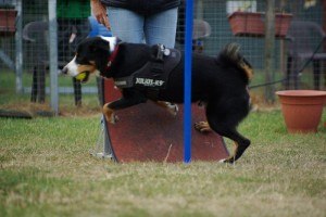 Flyball_2