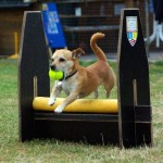Flyball_3